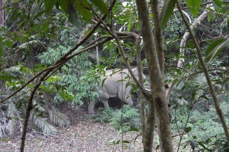 elefante khao yai roberta caldas